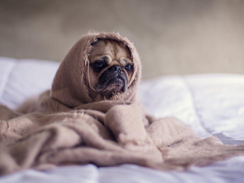 Comment votre position pour dormir affecte votre sommeil