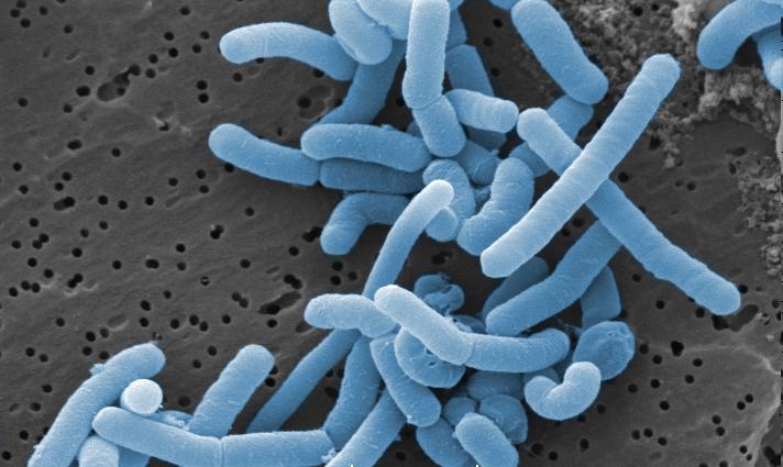 Le L-Gasseri, le complément alimentaire idéal pour l'organisme